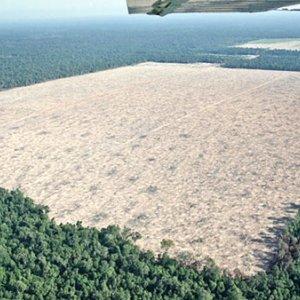 Deforestation Rate Alarming