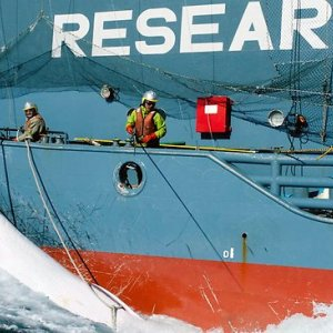 Japan Will Resume Whaling