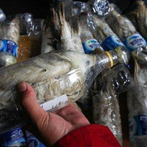 Smuggler Caught Stuffing Endangered Cockatoos in Plastic Bottles
