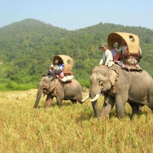 Travel Industry Urged to Fight Animal Cruelty