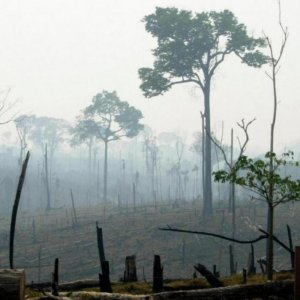 India-Sized Forests to Disappear by 2050