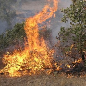 Ilam, Kurdestan Plagued by Deliberate Wildfires