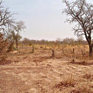 Drive Against Desertification Intensifies