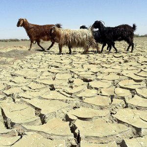Persisting Drought Demands Attention
