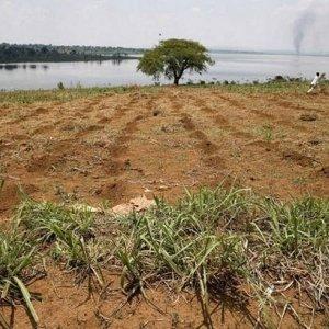 FAO to Help Farmers