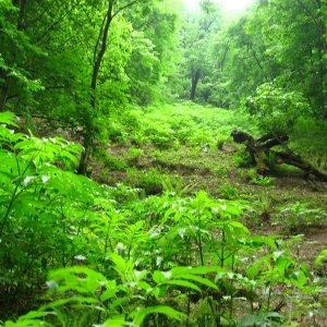 Plan to Curb Logging Underway