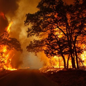 $6.1m Allocated for Combating Wildfires