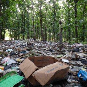 Northern Forests Trashed