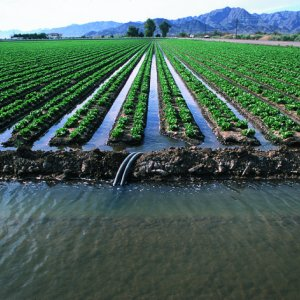 Funds to Buy Farmers' Water Rights