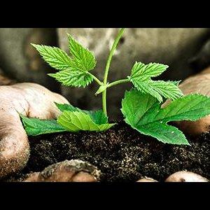 Green Laws Ignored Despite Directive