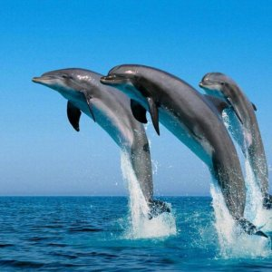 Protection for Marine Animals Inadequate