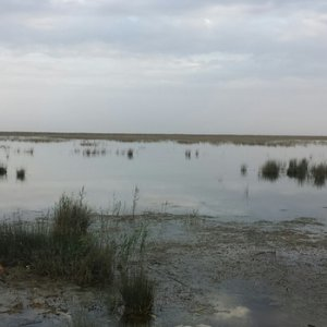 1st Int'l Ecological Meeting in Ahvaz