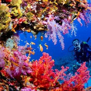 Oceans Doomed, Regardless of CO2 Reduction