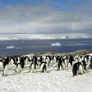 Iceberg Collision Kills Scores of Penguins