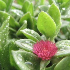 30% of Plant Species Threatened