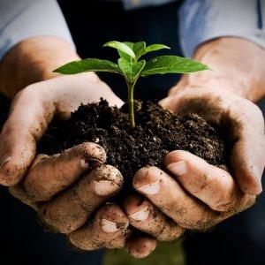 Qatar Soil Call Rejected