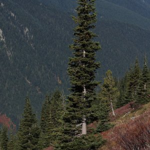 Scientists Say Some Trees Exacerbate Warming