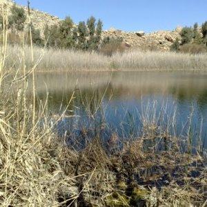 Wetland Restoration Effort