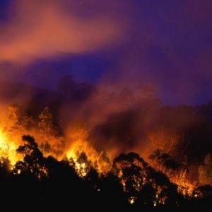 Wildfire Emergency Declared in Washington State