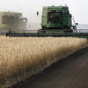 Russian Wheat Prices Slide