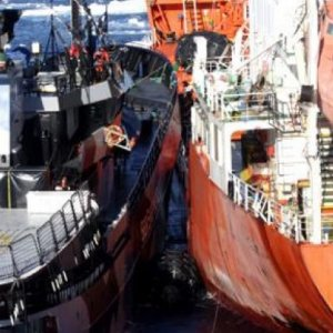 SSCS to Pay $2.55m to Japan Whalers