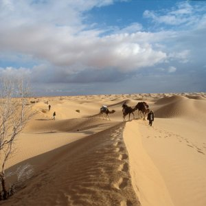 Spread of Deserts Costs $10.6t p.a.