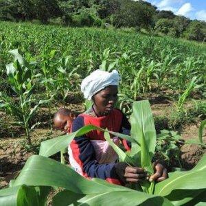 Zimbabwe Trade Deficit Narrows