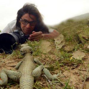 Documentary on Monitor Lizards