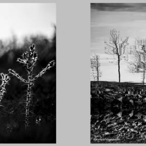 'Parallel Dualities' in Photo Exhibit