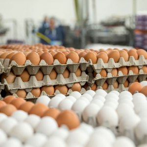 Iran's per capita egg consumption stands at 198.