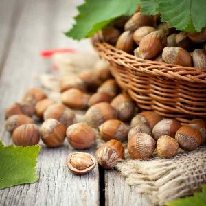 Hazelnut Production at 23,000 Tons p.a.
