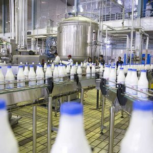 756k Tons of Milk Exported in 9 Months