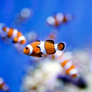 Markazi Exports Ornamental Fish