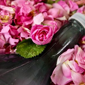 Kashan Rosewater, Oil Exports at 2,000 Tons p.a.