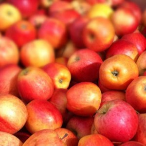 Apple Exports Estimated at 350K Tons