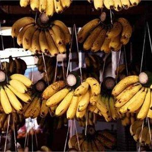 Banana Imports Top $260m