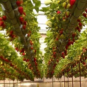 Plan to Increase Greenhouse Cultivation Area