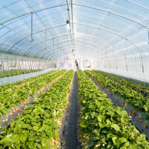 1,000 Hectares of Greenhouses Authorized