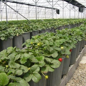 Plan to Transfer All Vegetable Farms to Greenhouses