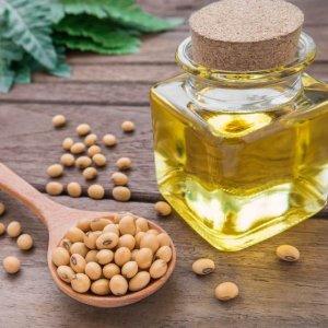 Iran, FAO to Kick-Start Joint Soybean Program