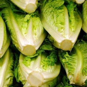 Lettuce Exports Earn $10m