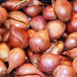 Onion, Shallot Consignments for to Regional States
