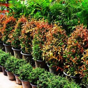 Iran Supplies 1% of World Flower Markets