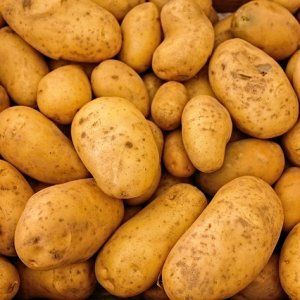 Potatoes Sold to 13 Countries