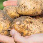 Holland-Iran Potato Seminar Convenes