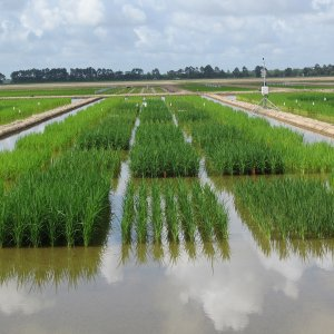 Rice Imports Down 24.4%