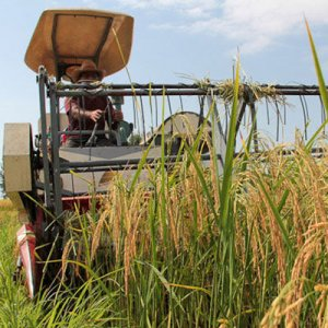 A 100% automation of rice harvest is  projected by the end of the sixth five-year development plan (2017-22).