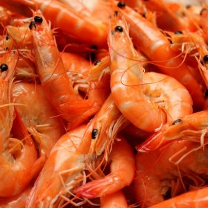 Shrimps Fetch $1m in 1 Month