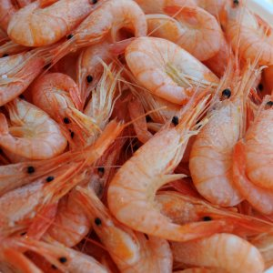 Shrimp Output Exceeds  20K Tons