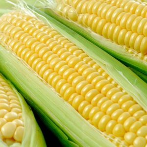 Sweet Corn Imports Exceed $6m